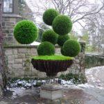 Decoratiune din arbusti