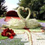 Lebede din flori