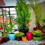 Plante si flori pentru balcon