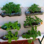 Suporturi plante din sticle de plastic