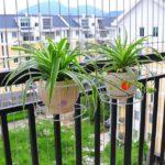 Vase cu plante decorative pentru balcon