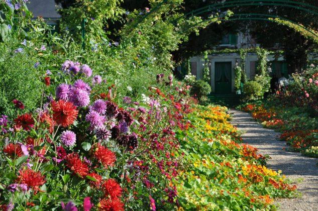 Alee marginita de multe flori