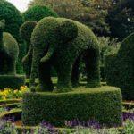 Animale din arbusti