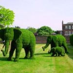 Arbusti in forma de elefanti