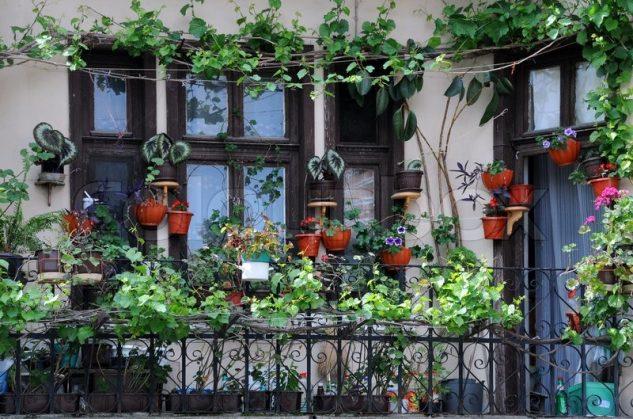 Balcon cu plante decorative