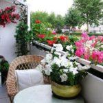 Balcon mic cu multe flori