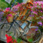 Biciclete cu cosuri de flori
