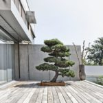 Bonsai pentru terasa