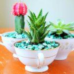 Cactusi in cani