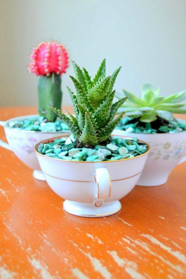 Cactusi in cani de cafea