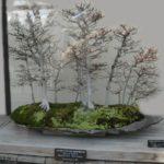 Decor cu bonsai si muschi de pamant