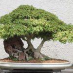 Decor cu bonsai si pietre