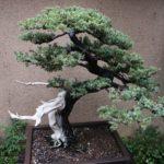 Decor de gradina cu bonsai