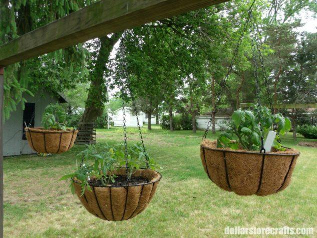 Decor terasa cu cosuri de plante