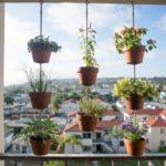 Flori agatate pe balcon