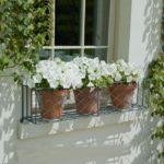 Flori albe la fereastra