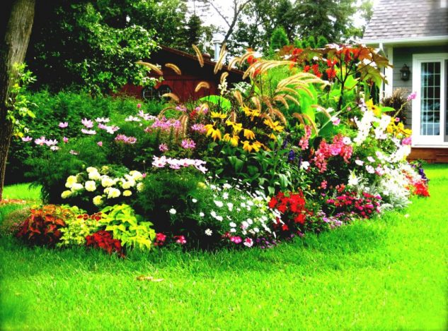 Flori si plante multicolore
