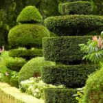 Garduri si decoratiuni din arbusti