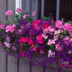 Glastra cu flori roz