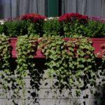 Glastra cu flori si plante agatatoare