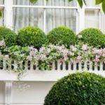Glastre cu arbusti si flori