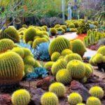 Gradina cu cactusi