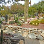 Gradina cu cactusi si arbori