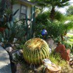 Gradina cu cactusi si arbusti