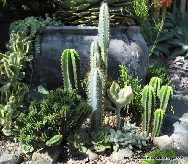 Gradina cu cactusi si plante suculente