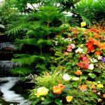 Gradina cu flori incantatoare