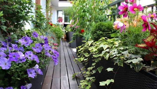 Gradina cu flori pe balcon