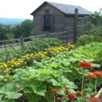 Gradina cu legume si flori