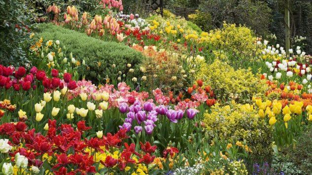 Gradina cu multe flori
