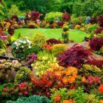 Gradina cu plante multicolore