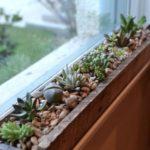 Gradina cu plante suculente la fereastra