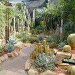Gradina exotica cu cactus