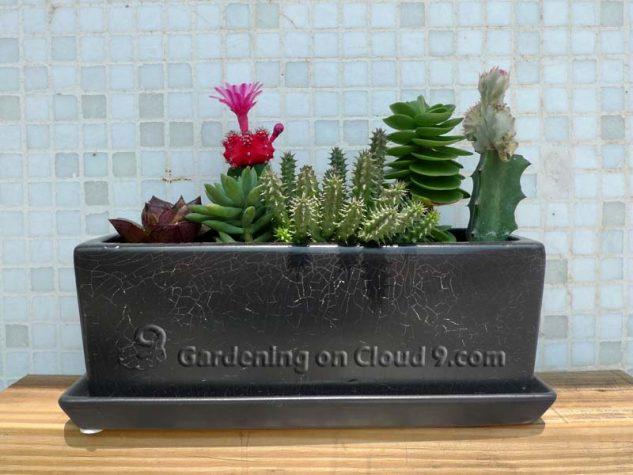 Gradina in miniatura cu cactusi