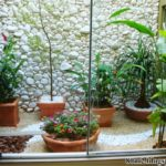 Gradina interioara cu plante si pietre
