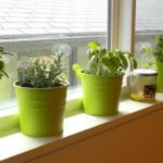 Gradina interioara cu vase de plante