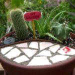 Vas cu cactusi
