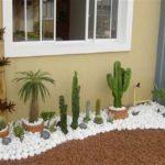 Gradina mica cu cactusi