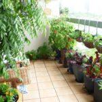 Gradina oe balcon cu plante si flori
