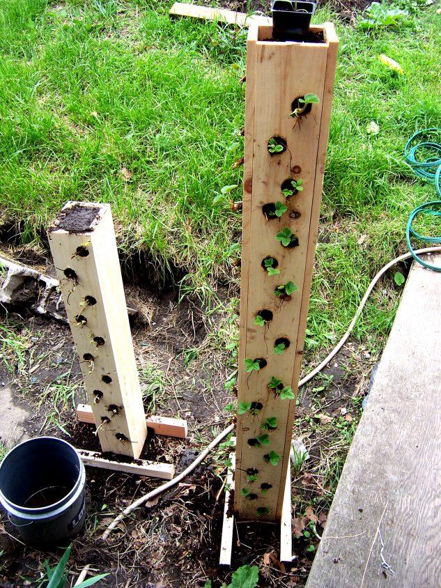 Gradina verticala capsuni din lemn