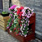 Gradina verticala cu flori colorate