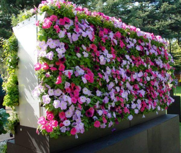 Gradina verticala cu flori roz