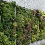 Gradina verticala cu plante decorative