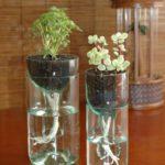 Gradini vericale in sticle