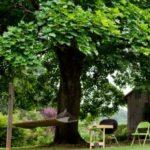 Hamac sub copac