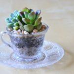 Miniatura de gradina in cana de cafea