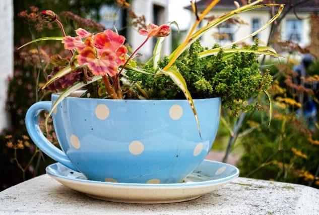 Plante colorate in cana de cafea